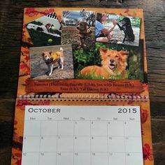 The 2015 Soi Dog calendar features over 70 dogs and cats rescued by Soi Dog Foundation and now living happy lives in their adoptive homes across the world!  This calendar can be yours for a donation of UK £9.00 - USD $15.00 - 11.50 Euros - AUD $16.00 +shipping.  For ALL ENQUIRIES and TO ORDER, email izzy@soidog-foundation.org