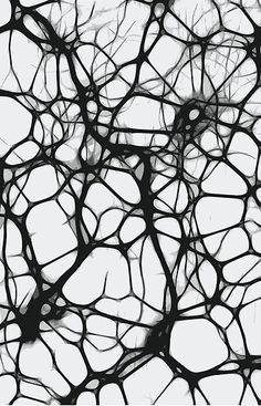 'Neuron Web' Photographic Print by TooCoolUnicorn Patterns In Nature, Textures Patterns, Art Grunge, Biology Art, Teaching Biology, Brain Art, Generative Art, Science Art, Life Science
