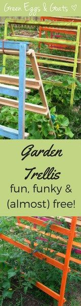 Garden Trellis and Tomato Cage built out of pallets