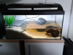 Das erste Aquarium wurde schnell zu klein