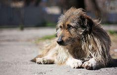 Чем травят собак догхантеры: Как спасти своего питомца Смотри больше http://kot-pes.com/chem-travyat-sobak-dogxantery/