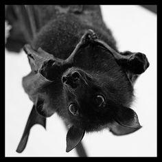 I love bats.