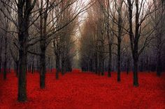Etsy Sale nature photography two 5x7 red forest prints by Raceytay, $15.00