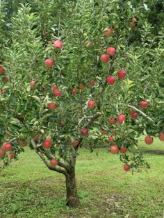 Fruit Trees For Zone 5: Selecting Fruit Trees That Grow In Zone 5 Many fruit trees thrive in chillier climes. If you are thinking of growing fruit trees in zone 5, you'll have a number of options. Click on the following article for a discussion of fruit trees that grow in zone 5 and tips for choosing fruit trees for zone 5.