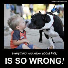Pit Bulls !!!!!!