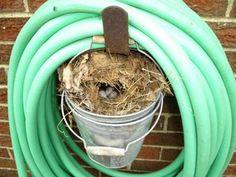 Strange Places Wrens Nest