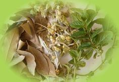 . Herbal Medicine, Natural Medicine, Healthy Beauty, Green Life, Alternative Medicine, Natural Cures, Things To Know, Asparagus, Herbalism