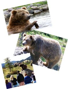 You can volunteer/intern at Casey Anderson's Grizzly Encounter in Montana