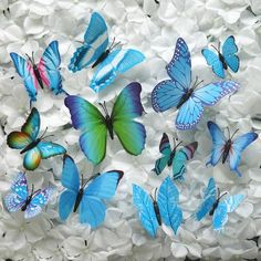 Purchase Lifelike Butterfly Wall Magnets and Wall Stickers from efavormart at wholesale rates. Perfect to make Majestic Backdrops and Wall Decorations with Multi-colored and Multi-sized Butterfly Wall Murals and Wall Decals. Butterfly Wall Decals, Diy Butterfly, Butterfly Decorations, Wall Decorations, Wall Decor Stickers, Diy Stickers, Cars Cake Design, Magnetic Wall, Decorative Accessories