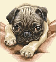 PUG dog complete counted cross stitch kit  STUNNING