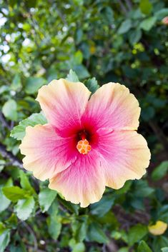 Garden Flowers - Annuals Or Perennials Tropical Flower By Undy Bumgrope City Chic Your Leading Plus Size Fashion Destination Tropical Flowers, Tropical Vibes, Hibiscus Flowers, Tropical Paradise, Tropical Garden, Exotic Flowers, Tropical Plants, Amazing Flowers, Beautiful Flowers