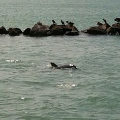 No matter how often I see them dolphins never get old to me!