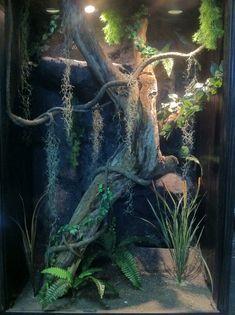 large reptile enclosure
