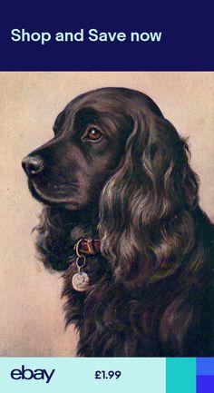 Maltese Dog Quotes - Dog Decor - - - Dog Care After Spay - Perro Cocker Spaniel, American Cocker Spaniel, English Cocker Spaniel, Black Cocker Spaniel Puppies, Corgi Puppies, Animal Sketches, Animal Drawings, Cockerspaniel, Dog Branding