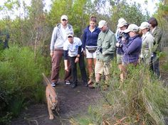 Join us on a guided tour of Tenikwa Wildlife Centre to see the indigenous wild cats of South Africa. African Wild Cats, Serval, Caracal, Cheetahs, Leopard, marabous, Chacma baboons and other wildlife. This is an unique opportunity to get close to some amazing creatures, and learn about their struggle to survive in the wild. Caracal, Serval, African Wild Cat, Surviving In The Wild, Baboon, Cheetahs, Tour Guide, South Africa, Opportunity
