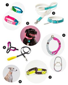 Dog Milk Holiday Gift Guide: 24 Stylish Collars, Leashes, and Harnesses - Design Milk Dog Collars & Leashes, Dog Leash, Stella Luna, Dog Milk, Most Beautiful Dogs, Collar And Leash, Cool Pets, Cat Design, Dog Behavior