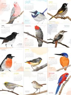 2015 desk calendar of Australian native birds. Digital watercolour print. For sale at williewagtailbyjulia.etsy.com.