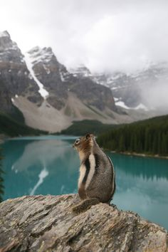 "A Chipmunk:  ""Enjoying The Spectacular Scenery.""  (Moraine Lake, Canadian Rockies.)  Photo By: Dave on 500px."