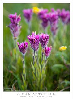Grassland+Biome+Plants+List | ... biome plants displaying 14 gallery images for grassland biome plants