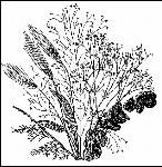 HOW TO DRY PLANT MATERIAL:  Almost any plant part, flowers, leaves, or stems, can be dried naturally or artificially. Many interesting and decorative cones, nuts, gourds, seed pods, flowers, foliage, and even small, graceful tree branches