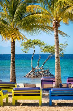 Secluded beach in Sandy Bay, Roatan, Honduras featuring an unusual tree in the shallow ocean water