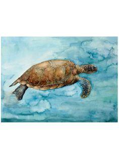 Tortuga Canvas Giclee