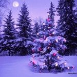 Download Free Merry Christmas 2015 Trees    Merry Christmas 2015 Trees Wallpapers & Images : We are presenting the latestMerry Christmas 2015 trees collections.The day of Christmas is celebrated as birth of Jesus Christ on 25th of December in...