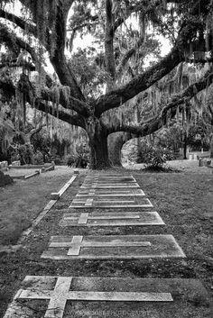 Bosque Bello Cemetery, Fernandina Beach, Florida Cemetery Monuments, Cemetery Headstones, Cemetery Art, Fernandina Beach Florida, Danse Macabre, Graveyards, Old Cemeteries, Coffin, Funeral
