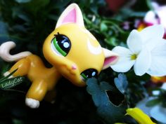 lps shorthaired cat