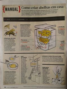 manual - como criar abelhas em casa Stingless Bees, Science Art, Animals And Pets, Honey, Bullet Journal, Plantar, Future, Raising Bees, Bee Boxes