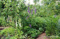 Eetbare bostuin inclusief pdf lijst over geschikte eetbare bosplanten Garden Yard Ideas, Plants, Cottage Garden, Shade Garden, Permaculture Gardening, Forest Garden, Veggie Garden, Front Yard, Garden Inspiration
