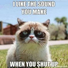 "Grumpy Cat Is a Star. Grumpy Cat Stars in ""Hard To Be a Cat at Christmas"" Music Video. Photos and video of Grumpy Cat. Grumpy Cat Quotes, Meme Grumpy Cat, Funny Cat Memes, Memes Humor, Grumpy Kitty, Grump Cat, Angry Cat Memes, Cat Jokes, Cats Humor"