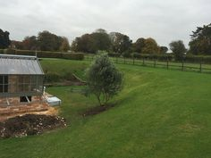 23/10 - olive tree moved from Forge Cottage to GF