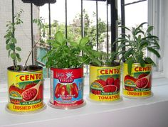 Tomato Can Herb Garden.  (how to)