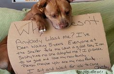 Pit Bull That Spent 5 Years in Shelter Finally Gets Adopted Thanks to Facebook Plea