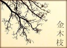 fall tree branch - Google Search