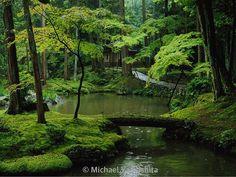 Kokedera Kyoto Japan.  See this Instagram photo by @natgeo • 329.2k likes