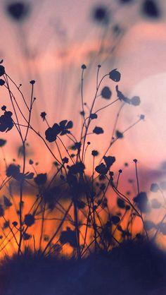 Night Nature Flower Sunset Dark Shadow Red Flare  #iPhone #5s #wallpaper
