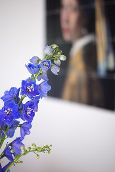 Blauer Rittersporn | Foto: Sabine Wittig