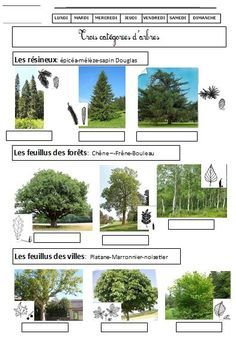 EEDD La forêt cycle 2 cycle 3 | BLOG GS CP CE1 CE2 de Monsieur Mathieu NDL