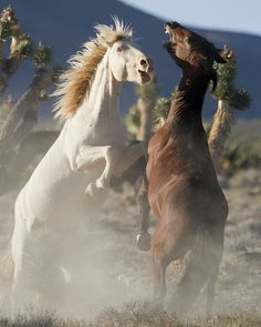 Horse Photos, Horse Love, Horses, Animals, Animales, Pictures Of Horses, Animaux, Equine Photography, Animal