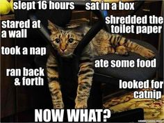 This is my kitties, except shredding toilet paper. lol