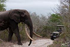 temba.elephant   Tembe Elephant National Park - Tembe Elephant Park - Les avis sur ...