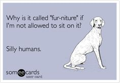 Why is it called 'fur-niture' if I'm not allowed to sit on it? Silly humans.