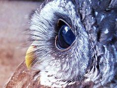 Follow the white owl!