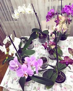Orchid care - Orchid care – Nermin Candemir Özyurt You are in the right place about garden house Here we offer - Garden Types, Garden Crafts, Orchid Care, Flowers, Floral Arrangements Diy, Little Gardens, Plants, Planting Flowers, Botanical Gardens