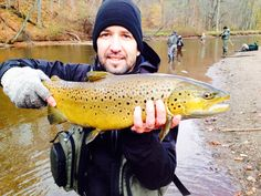 First NY Brown