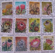 old South African postage stamps. South A frica Cricket team log today. Out Of Africa, My Land, Pretoria, My Heritage, African History, Stamp Collecting, Cape Town, Postage Stamps, South Africa