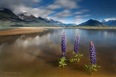 River's Beauty by Christian Lim, via 500px