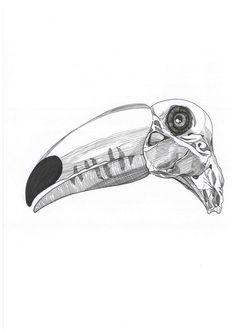 Sketch_toucan_19